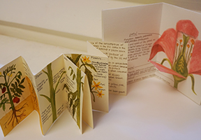image of accordion book