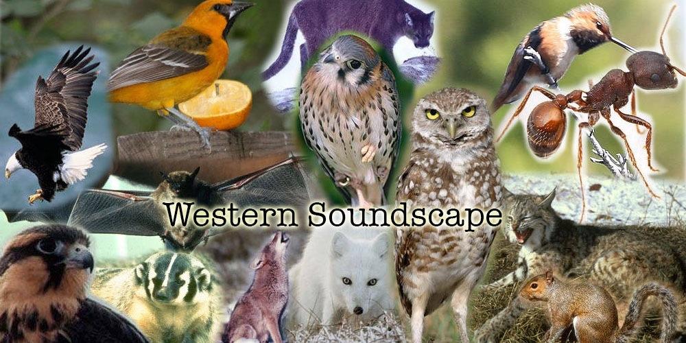 Western Soundscape collection