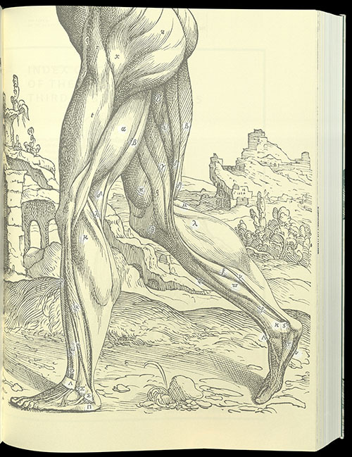 Vesalius, The Fabric of the Human Body, 2014